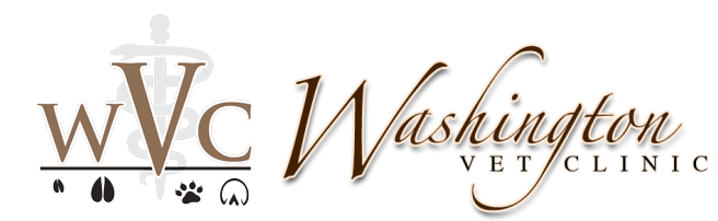 Washington Veterinary Clinic